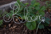 bloom wire stake